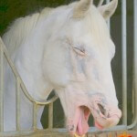 Blanco le cheval rieur du centre equestre d'Arbonne