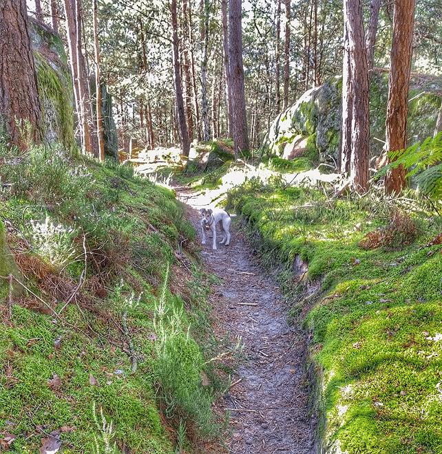 Chemin forestier à Arbonne-la-Forêt