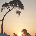 Lever de soleil arbonne la foret (centre equestre d'arbonne)